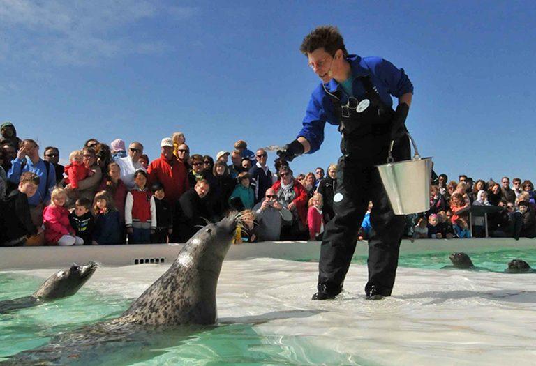 Voeren van zeehonden bij Ecomare