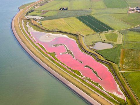 Het roze meer op Texel (foto Flying Focus)
