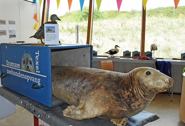 Opgezette zeehond bij Ecomare
