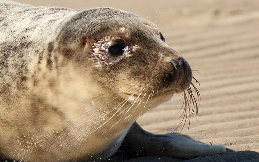 donder, de zeehond van sponsor raadhuis
