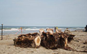 Wervels van de vinvis op het strand