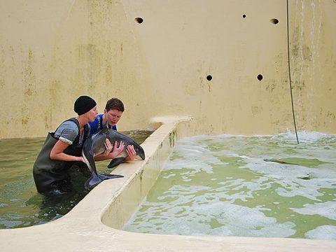 Bruinvis wordt overgezet in andere bassin