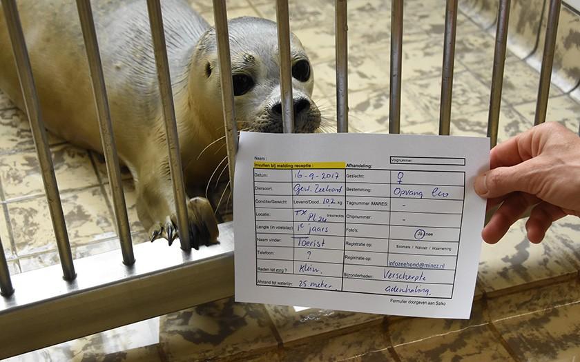 Ingevuld strandingsformulier wordt getoond bij de opvangzeehond waar het over gaat