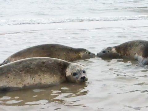 Zeehonden terug naar zee