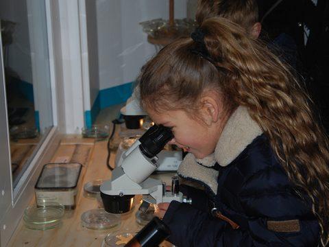 Meisje kijkt door een microscoop in het zeelab