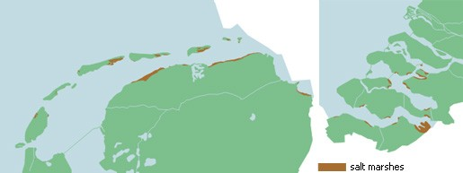 Illustration of the salt marshes along the Dutch coast (Ecomare)