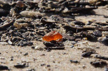 Barnsteen op het strand (© Foto Fitis)