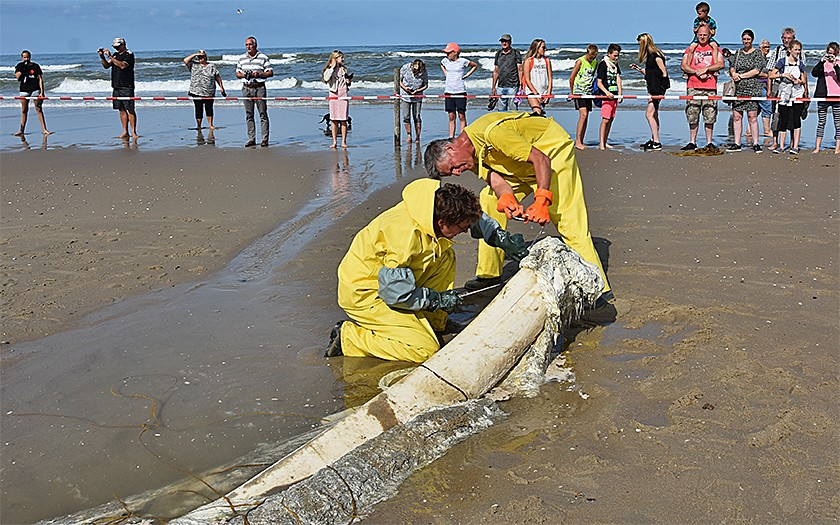 Mannen ontleden walviskaak op het strand