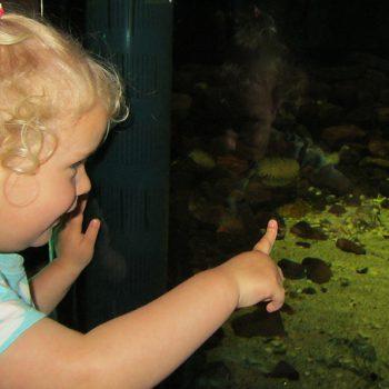 Publiek in zeeaquarium