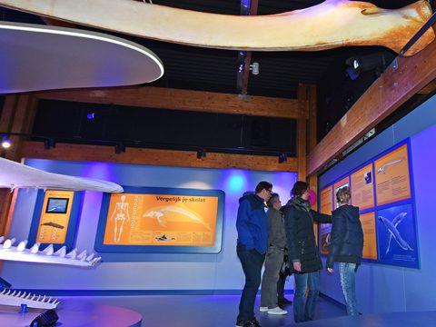 Bezoekers bekijken de mini-expositie over de gewone vinvis in de Walviszaal