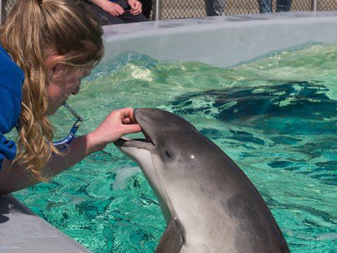 Dierverzorger Lisanne voert een bruinvis