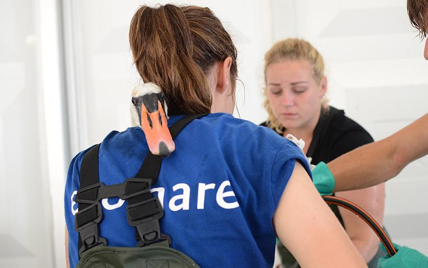 Dierverzorger Jasmijn op rug gefotografeerd, zwaan kijkt over haar schouder terwijl hij wordt gewassen
