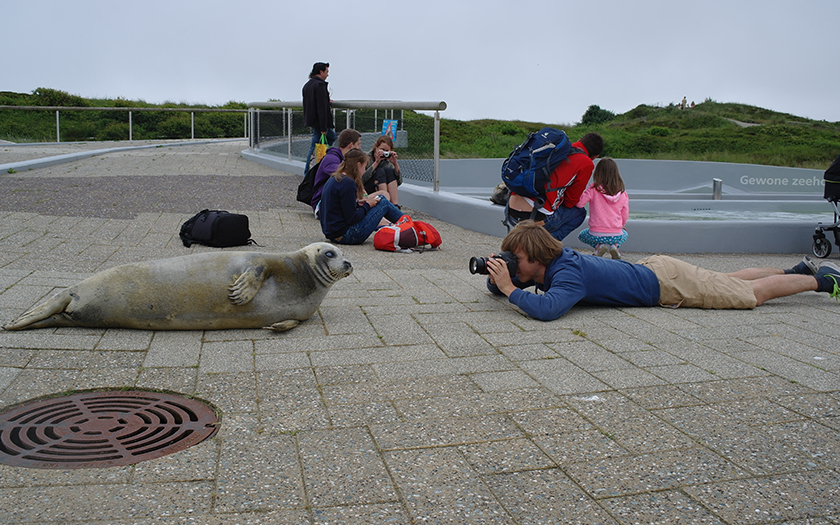 Zeehond ligt buiten het bassin en bezoeker ligt op zijn buik haar te fotograferen