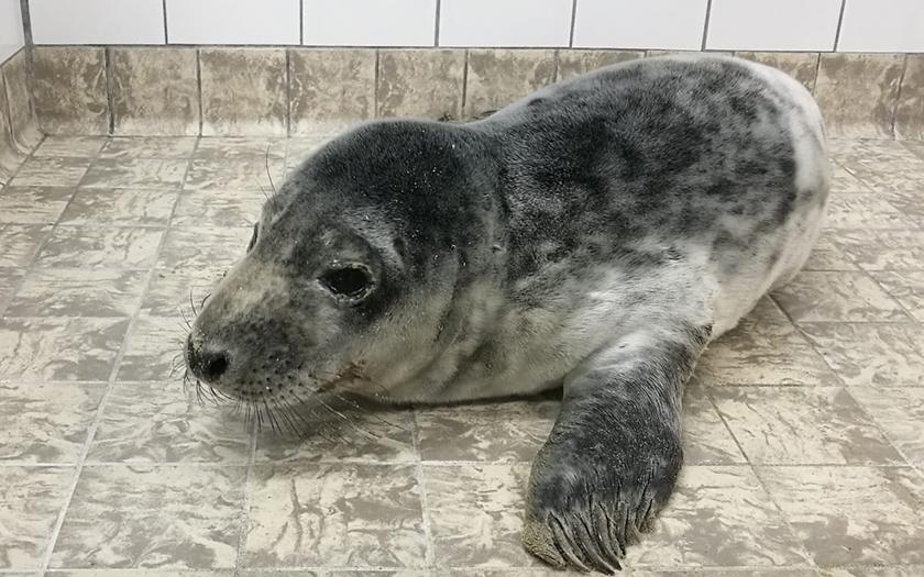 Zeehondenpup bij Ecomare