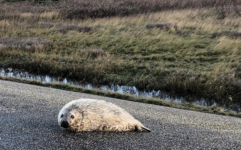 grijze pup op dijk-moeder zichtbaar