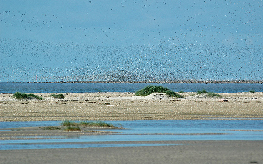 Millions of birds are dependent upon the wadden region