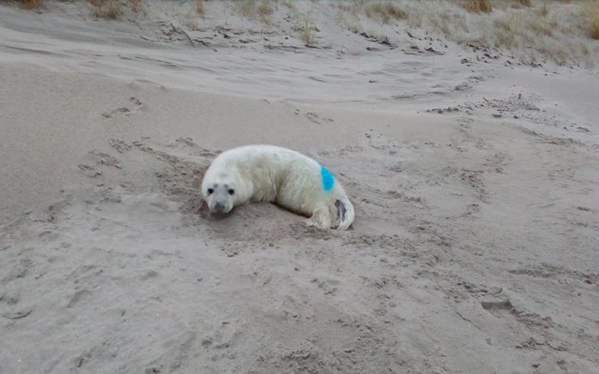 Jonge zeehonden op strand met bord erbij