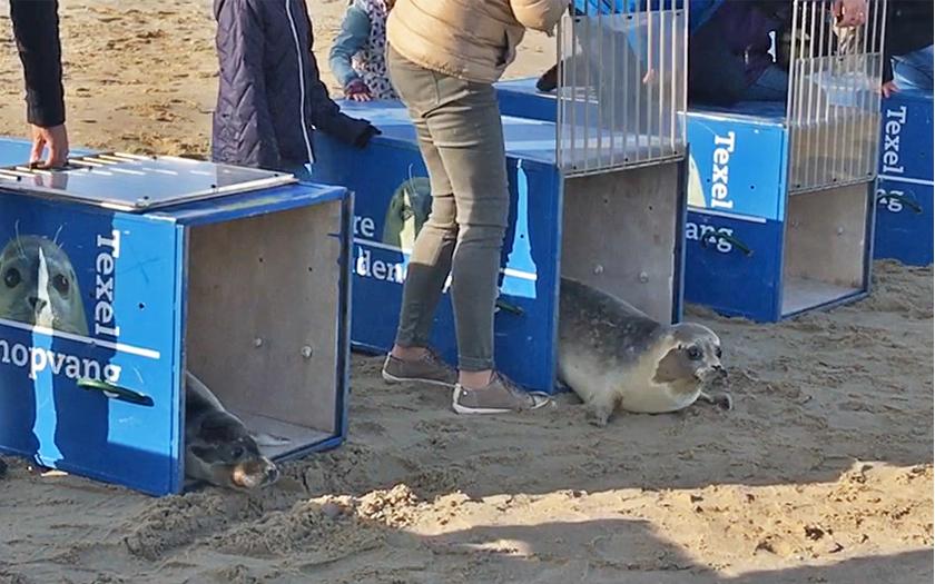 zeehonden kruipen kisten