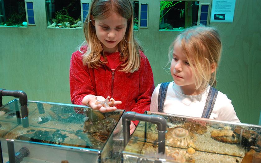 Meisjes bij kleine aquaria met zeester in hand