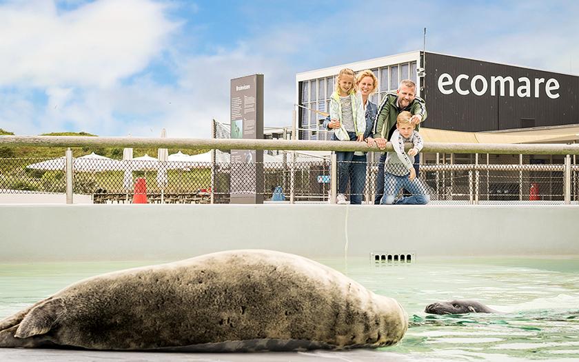 Grijze zeehonden bassin