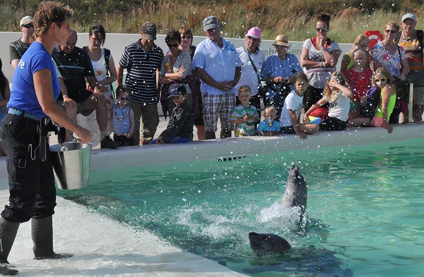Voeren van de zeehonden bij Ecomare