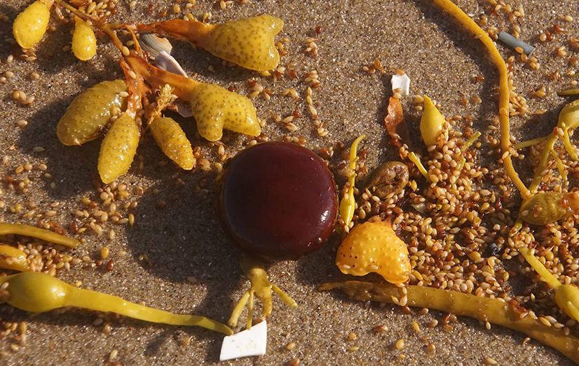 Tropisch zeehart (foto Sytske Dijksen)