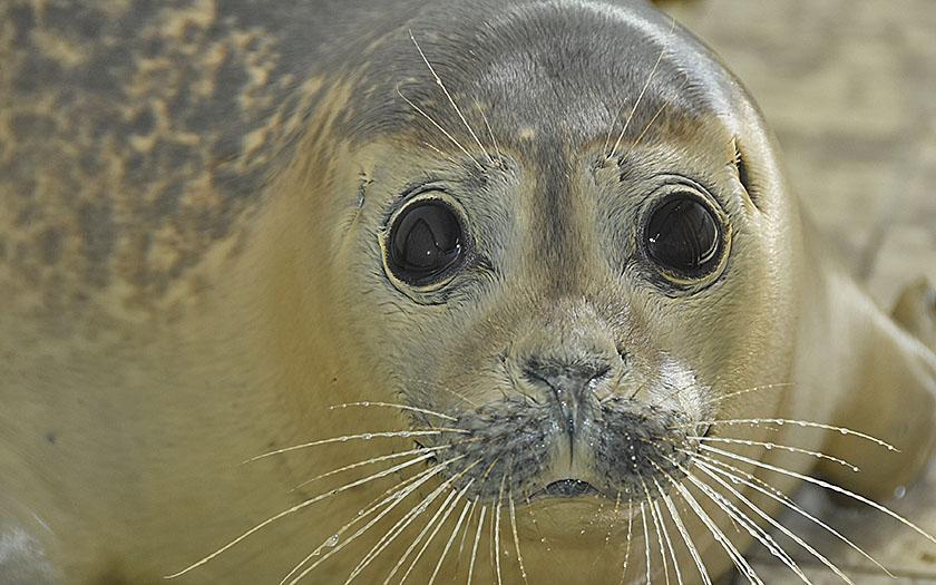 Kijken door de ogen van een zeehond | Ecomare Texel