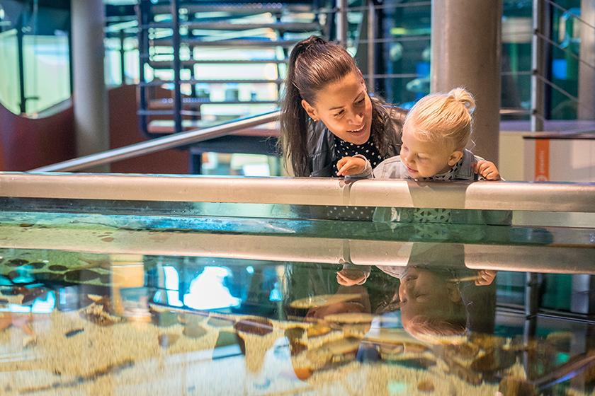 Zeeaquarium-Ecomare op Texel