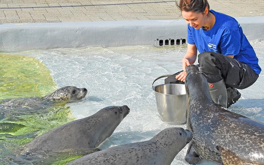 Zeehonden bij Ecomare op Texel
