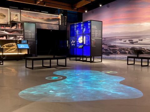 Overzicht-tentoonstelling Wonderlijk Wad-zonder bezoek