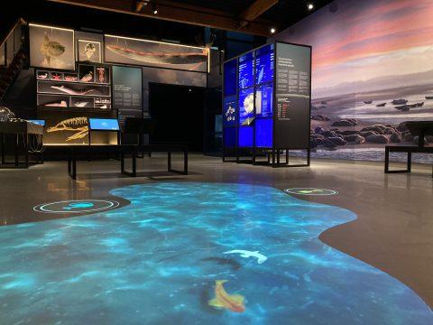 Interactief vloerspel-tentoonstelling Wonderlijk Wad-zonder bezoek