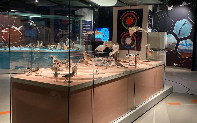 Nieuwe tentoonstelling bij Ecomare: Weg van de Waddenzee